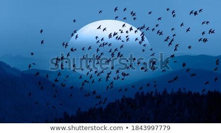 луна гор полнолуние озеро свет Сток-фото © franky242