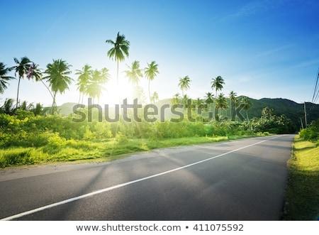 trópusi · út · napos · idő · növényzet · oldal · kék - stock fotó © kaycee