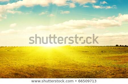 сено осень области синий продовольствие фермы Сток-фото © natalinka