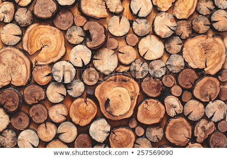 stacked wood Stock photo © prill