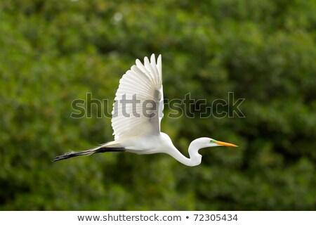 Foto stock: Blanco · vuelo · agua · cielo · naturaleza · mar