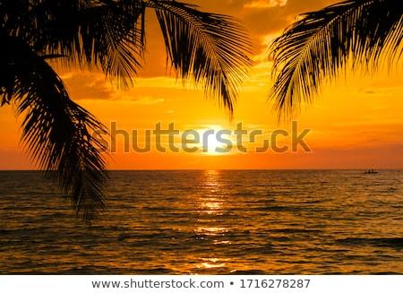 fa · égbolt · absztrakt · tavasz · fű · naplemente - stock fotó © ruslanomega