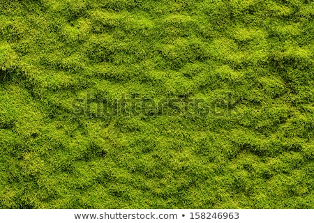 Rock Wall With Plants Stock photo © rhamm