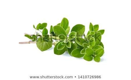 Orégano branco comida vegetal ramo macro Foto stock © MKucova