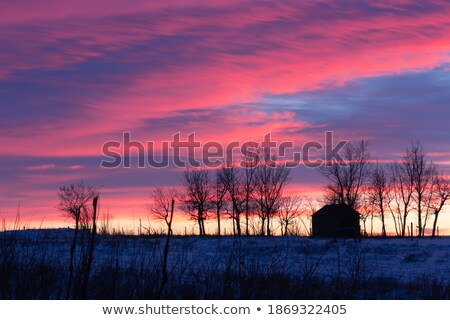 Winter schemering prairie noordelijk Colorado Stockfoto © PixelsAway