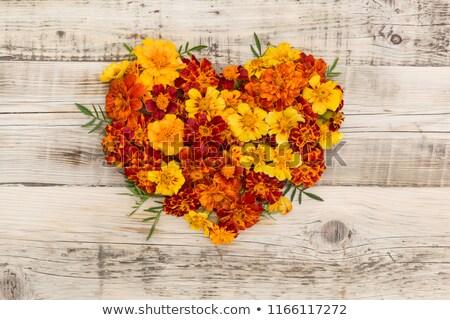 Foto stock: Marigolds Or Tagetes Erecta Flower Vintage