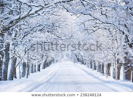 Steegje bomen sneeuw gedekt landschap achtergrond Stockfoto © haraldmuc