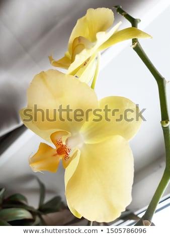 belle · fleurs · branche · tropicales · fleur · arbre - photo stock © nalinratphi