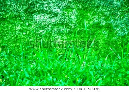 cubierto · hiedra · pequeño · capilla · paredes · edificio - foto stock © digifoodstock