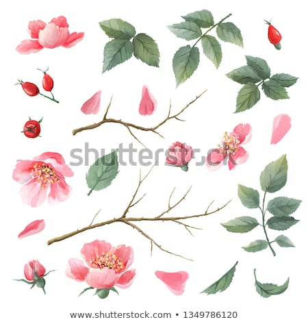 branche · rouge · sauvage · nature - photo stock © yelenayemchuk
