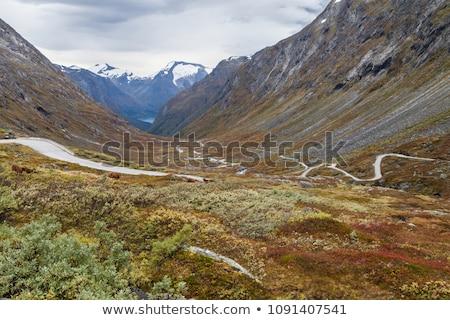 Route une Auto routes neige été Photo stock © compuinfoto