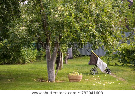 A young female under an apple tree Stock photo © IS2