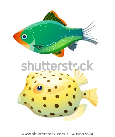 Green tiger barb and boxfish isolated on white Stock photo © robuart