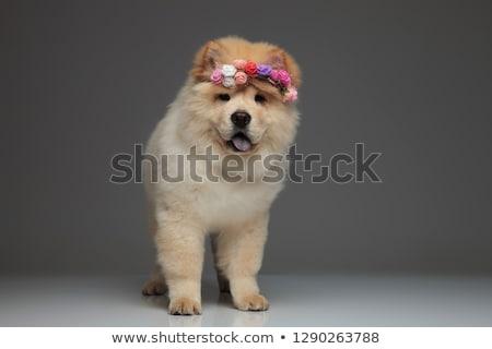 Imádnivaló visel friss virágok korona zihálás Stock fotó © feedough