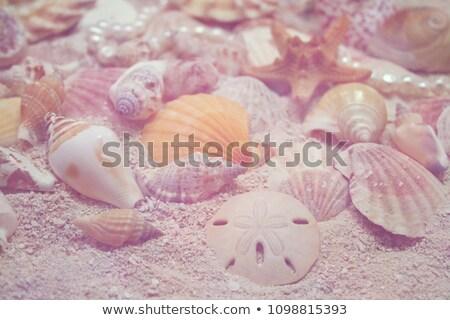 Denizyıldızı pembe kum plaj tropikal deniz Stok fotoğraf © lunamarina