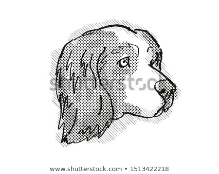 Clumber Spaniel Dog Breed Cartoon Retro Drawing Stock photo © patrimonio