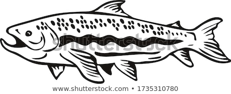 Spotted Trout Fish Jumping Woodcut Retro Black and White Stock photo © patrimonio