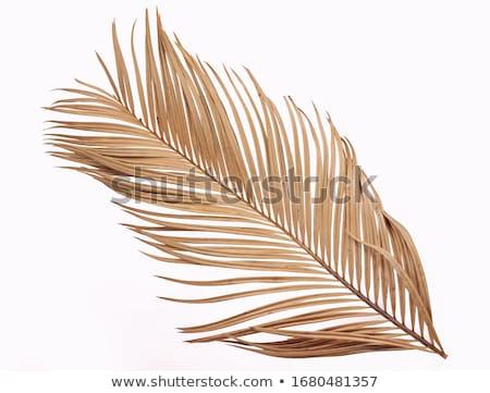 Secar hoja de palma primer plano resumen hoja fondo Foto stock © zhekos