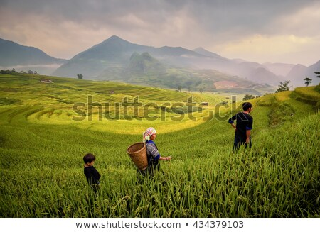 Agriculture in Philippines Stock photo © joyr