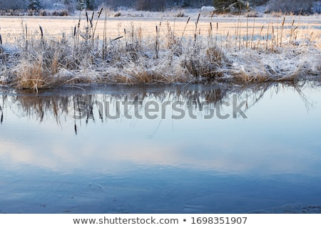 frosty snow covered grass ditch Stock photo © morrbyte