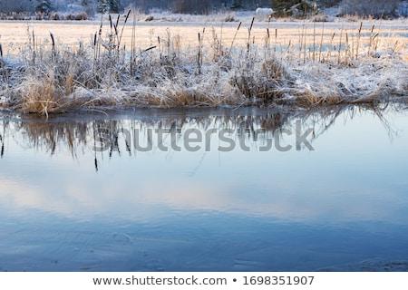 Mroźny śniegu pokryty trawy sezonowy niebieski Zdjęcia stock © morrbyte