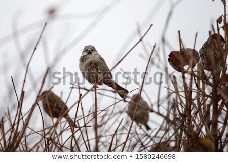 凍結 女性 スズメ 家 冬 日 ストックフォト © taviphoto