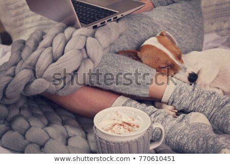 Warm wollen sokken vrouwelijke benen Stockfoto © stevanovicigor