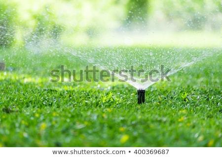 芝生 · スプリンクラー · 水まき · 庭園 · 水 · 春 - ストックフォト © leeser
