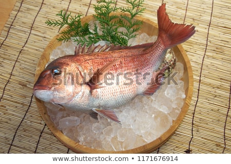 pagellus sea bream closeup stock photo © antonio-s