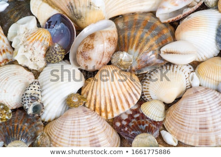 Tropical sea beach with part of shells and sand Stock photo © meinzahn