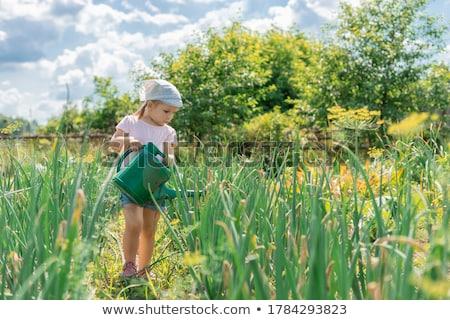 színes · locsol · retro · izolált · fehér · kertészkedés - stock fotó © searagen