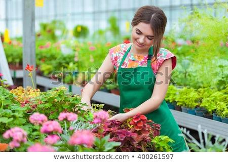 Nő dolgozik üvegház portré virágok tart Stock fotó © kasto