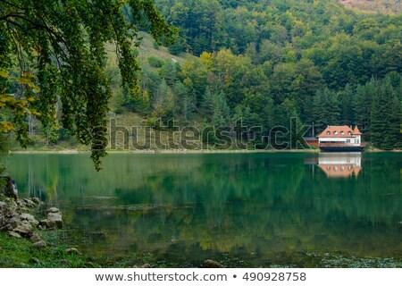 tó · hegyek · Romania · hegy · környezet · fenyőfa - stock fotó © igabriela