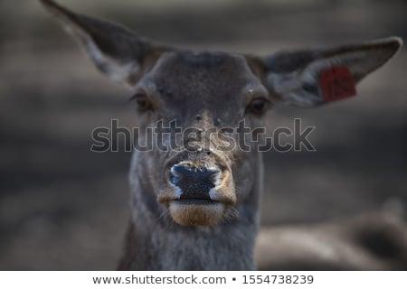 Herten permanente wal meer stoom zichtbaar Stockfoto © mdfiles