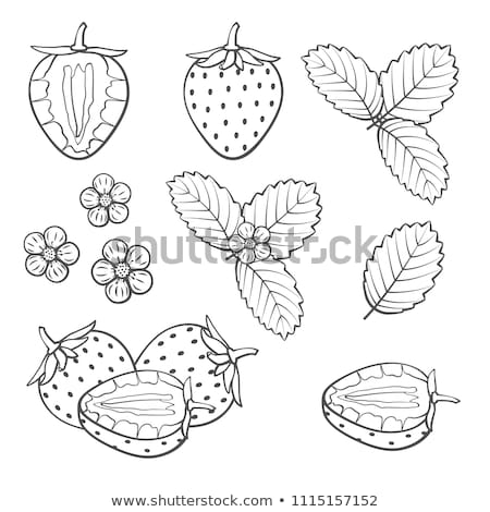 Friss eprek egész fél három fehér Stock fotó © Digifoodstock