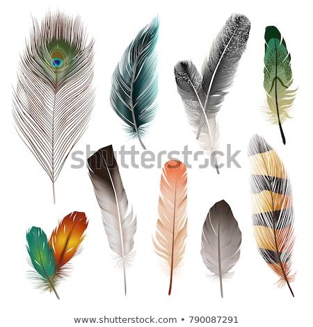 desenho · animado · pássaro · isolado · abstrato · branco · estilo - foto stock © robuart