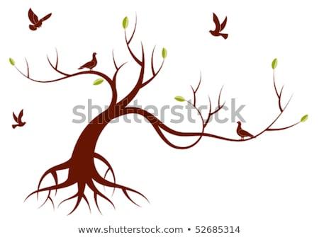 Witte vogels boom wortels textuur natuur Stockfoto © IS2