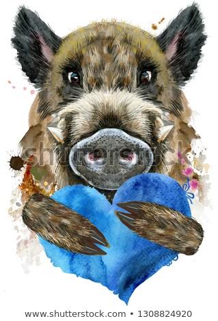 Watercolor portrait of wild boar with blue heart Stock photo © Natalia_1947