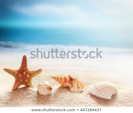 Seestern sandigen tropischen Strand Wasser Strand Himmel Stock foto © AndreyPopov