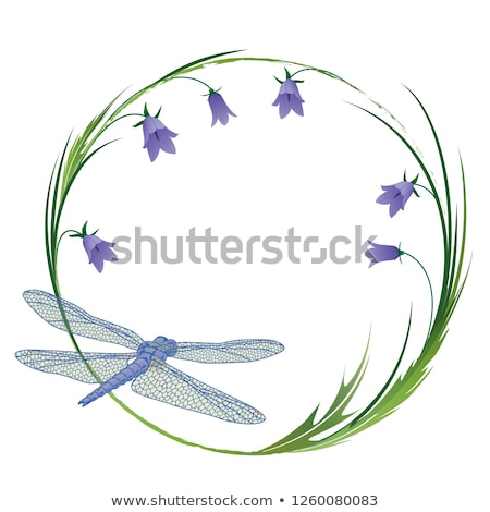 Bluebells and grasses Stock photo © suerob