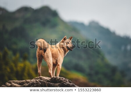 Friend stood on top of mountain Stock photo © photography33
