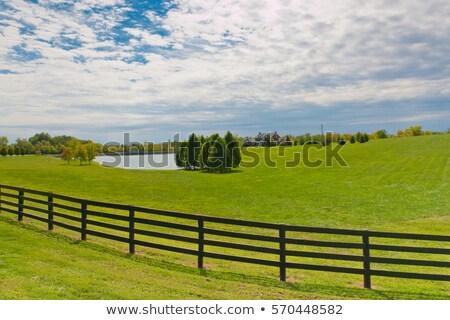 Fenced pond Stock photo © Artlover