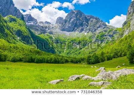 ツリー 平野 孤独 空 自然 風景 ストックフォト © pzaxe