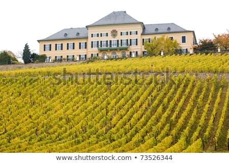 Johannisberg Castle with vineyard, Hessen, Germany Stock photo © phbcz