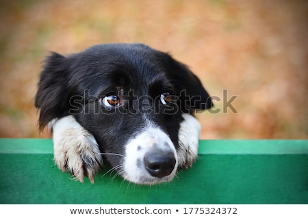 Stock photo: Dog Looking to the Side
