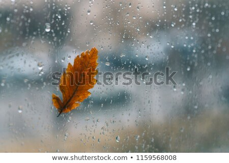 Rain drop falling from a leaf Stock photo © jrstock