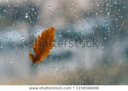 chute · feuille · pointe · goutte · d'eau · vert · usine - photo stock © jrstock