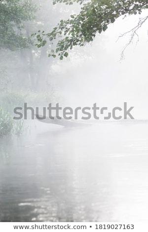 Sis göl panorama görmek orman dağlar Stok fotoğraf © fxegs
