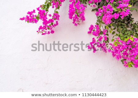 Red flowers blue wall Stock photo © Anterovium