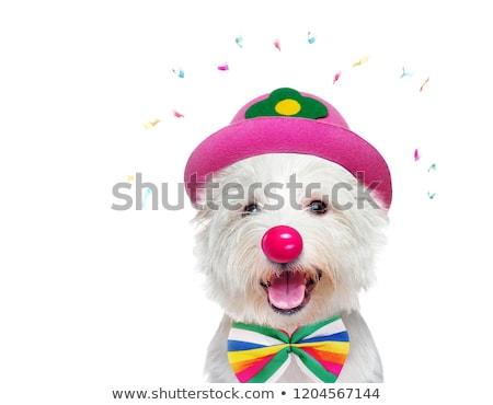 dog clown Stock photo © willeecole